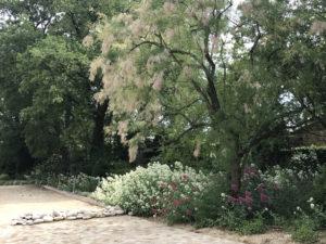 massif et arbres